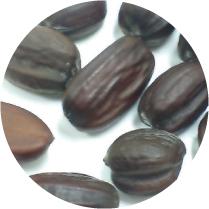 ホホバ種子油写真